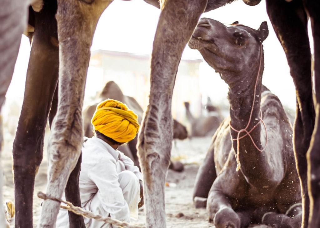 Signature Itineraries at Beyond the Taj, Itineraries