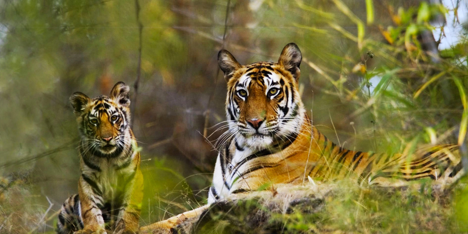 Bandhavgarh National Park - Beyond the Taj, Bandhavgarh National Park