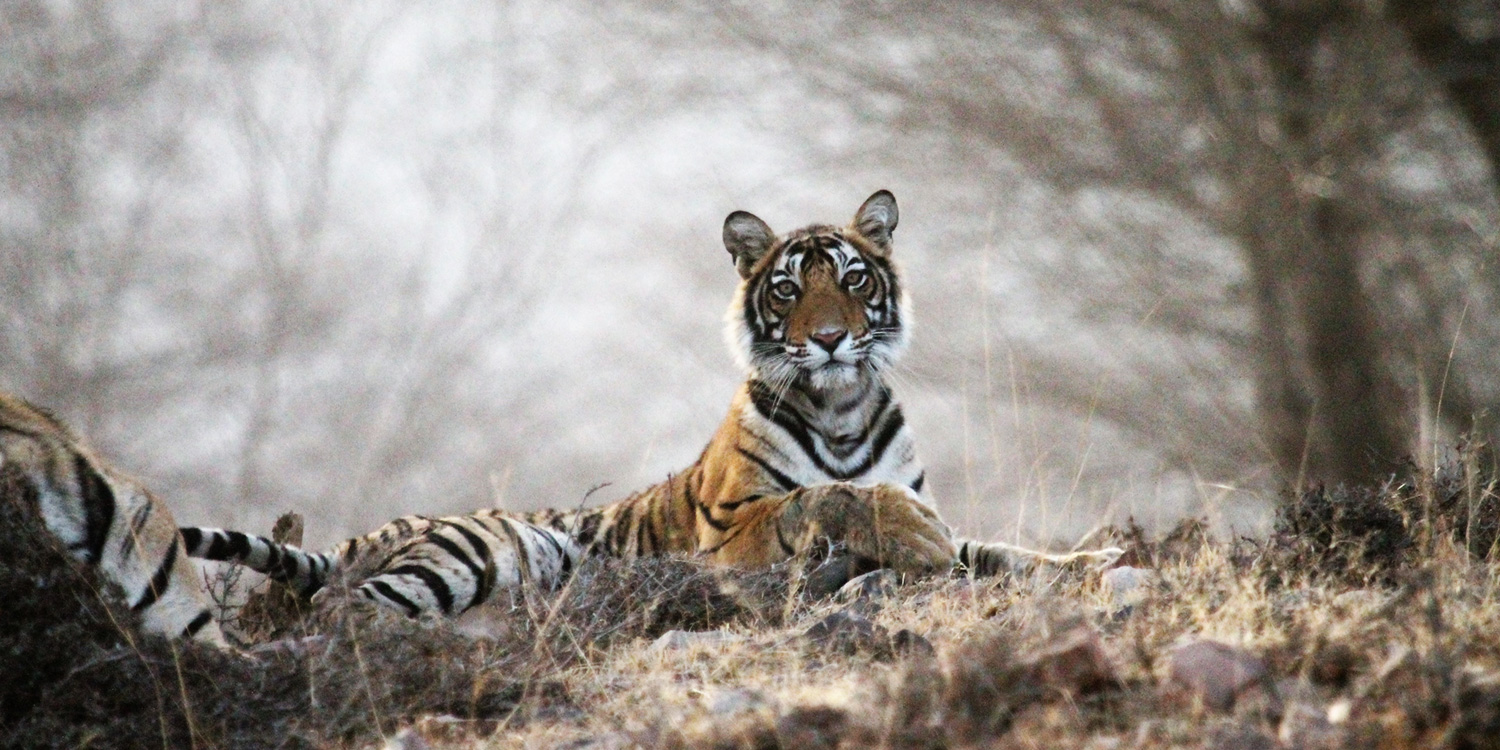 Ranthambore National Park and Tiger Reserve - Beyond the Taj, Ranthambore National Park
