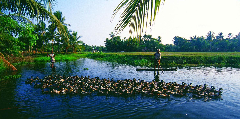 Signature-Kerala