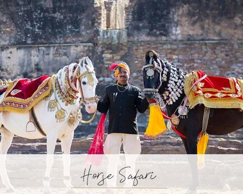 Jodhpur: The Blue City of Rajasthan - Beyond the Taj, Jodhpur