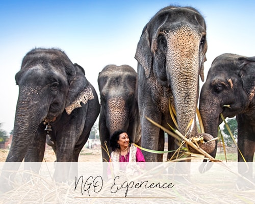 NGO Experience