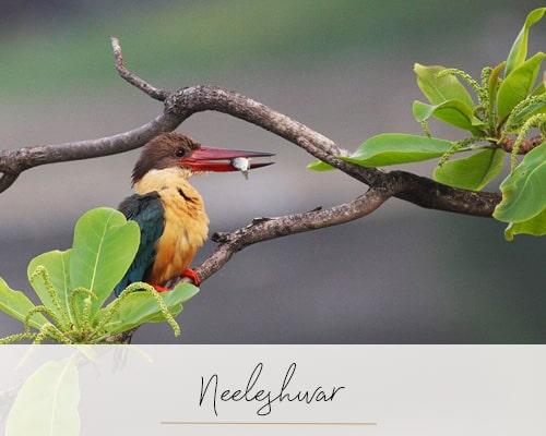 Neeleshwar