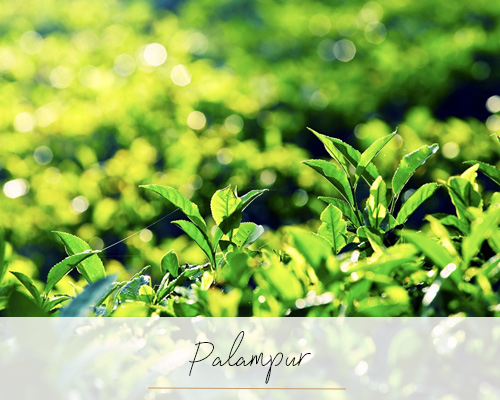 Palampur