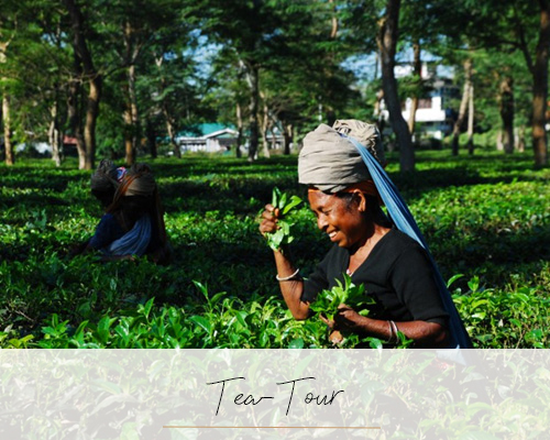 Tea-Tour