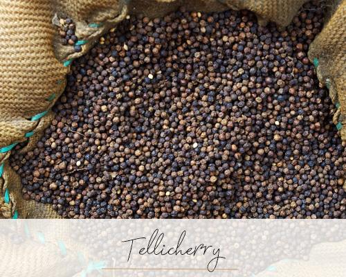 Tellicherry